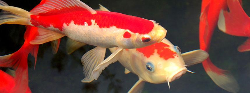 fischpflege-heilmittel